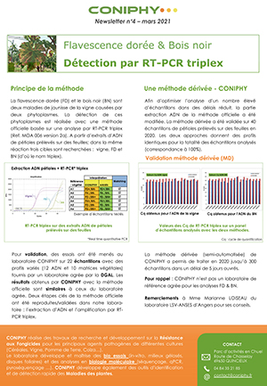 Newsletter n°4 de CONIPHY